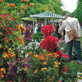 Bunte Gartenvielfalt - Pillnitzer Gartenwochenende