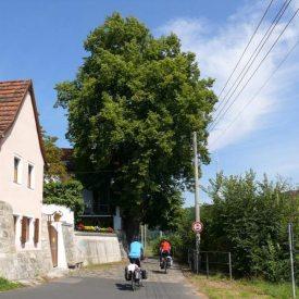 Elberadweg in Dresden Laubegas