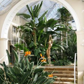Palmenhaus Pillnitz - Architektur, Natur und Kunst