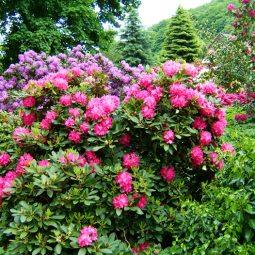 Rhododendronpark Wachwitz in D