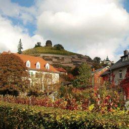 Winzerhaustour mit der Sächsischen Vinothek