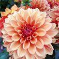 Gärtnerei Pfitzner Blumen und