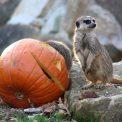 Halloween Zoo Dresden