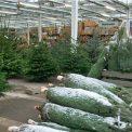 Weihnachtsbaumverkauf Pfitzner